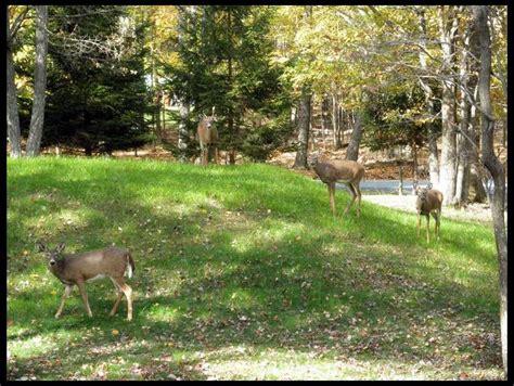 Backyard Archery Triyae Small Backyard Archery Range Various Design