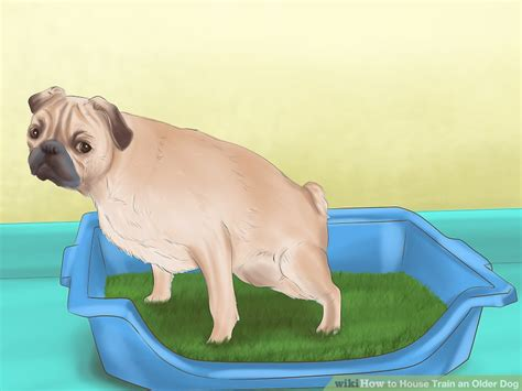 How To House Train An Older Dog With Pictures Wikihow