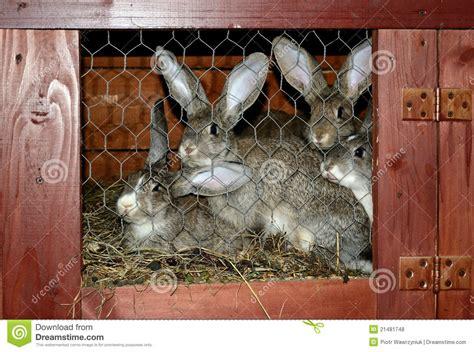 conigli in gabbia conigli in gabbia fotografie stock libere da diritti