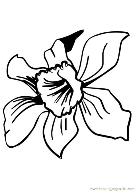 cosmos flower coloring page free coloring pages