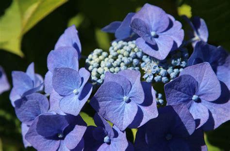 offerte fiori offerta fiori 2 floricoltura tagliani