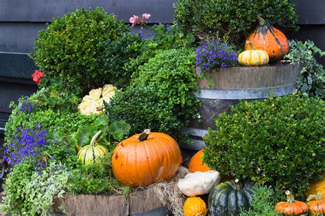 Pumpkin Yard Decorations by 11 Fall Landscaping Projects For Your South Shore Home F D Candelieri Landscape Managementf D