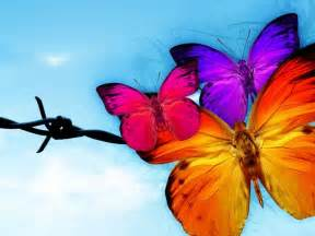 pictures of colorful butterflies colorful butterfly flying 27 background wallpaper