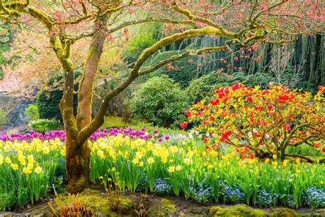 imagenes de flores espirituales imagenes ethel imagenes hermosos paisajes de rep