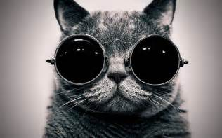 Can Blind People Swim Cat In The Glasses Wallpapers And Images Wallpapers