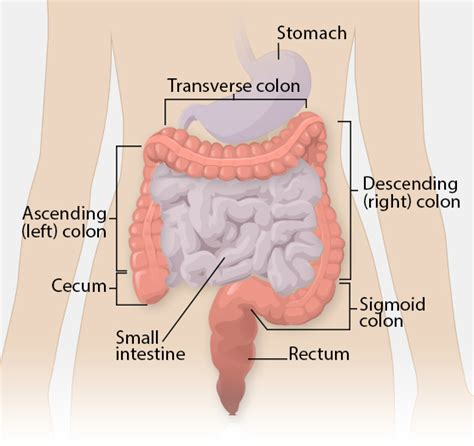 diagram of bowel cdc what is colorectal cancer
