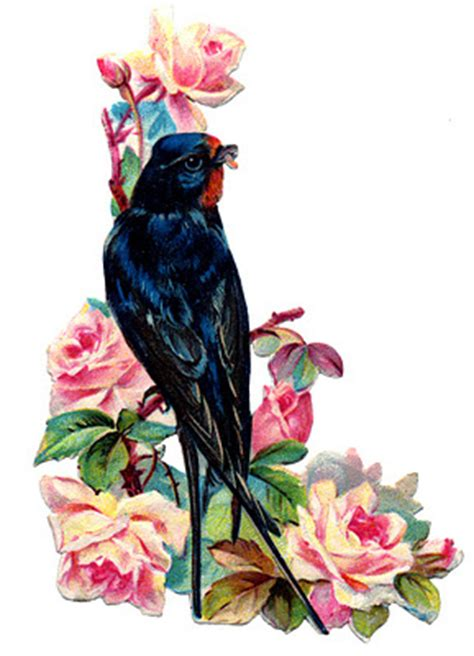 victorian bird image swallow  pink roses