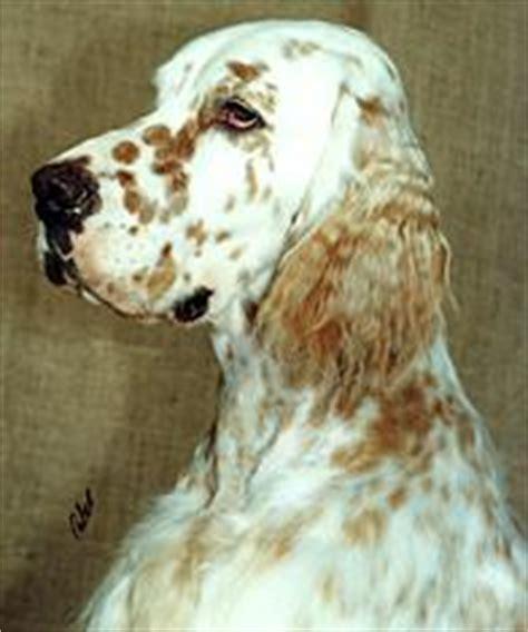 au setter dog lisieux breed profile