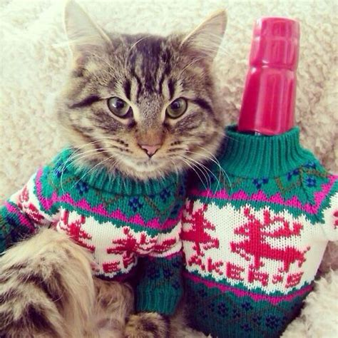 matching sweaters for and owner matching sweaters for cats and owners