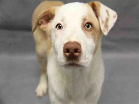 augusta adoption adoptable dogs for may 20 2016 politics caigns and elections
