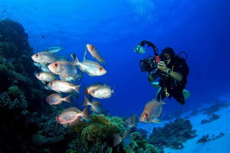 diving hairstyles dive hacks 20 underwater photography tips and tricks from