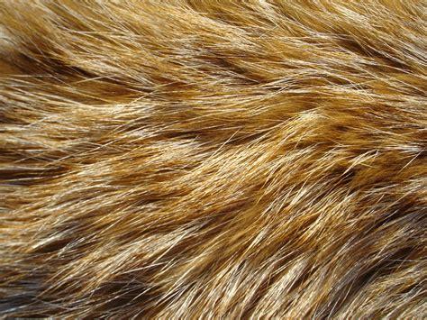 hairby minklittle fur texture 6 by fox n wolf on deviantart