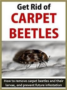 get rid of carpet beetles how to remove carpet beetles