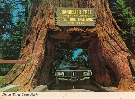 chandelier drive through tree postcards from the lost world the drive thru tree j c