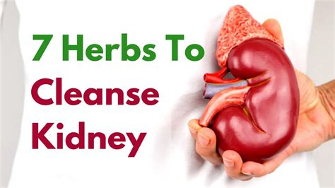 How To Detox Your Kidney Naturally At Home by 7 Kidney Detox Herbs To Cleanse Kidney At Home