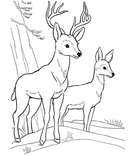 coloring page deer deer color pages az coloring pages