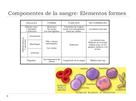 la sangre de los b0062xe6ao sistema circulatorio sangre