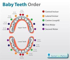 When Baby Teeth Fall Out What To Expect baby teeth order and knowing when teething starts
