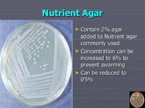 Media Mikroba Nutrient Agar Biolife culture media 3