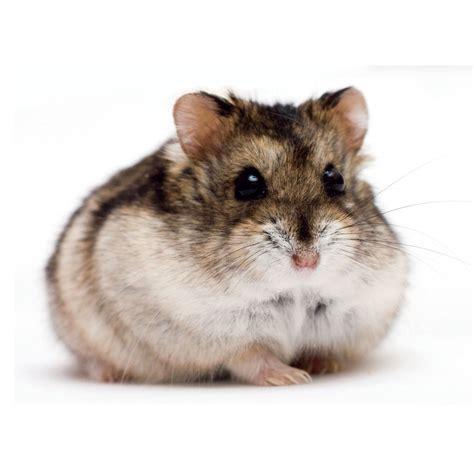 X Bamester Hamsters Critter Jungle
