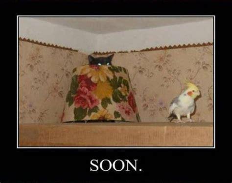 Soon Meme - soon meme collection 17 pics picture 6 izismile com