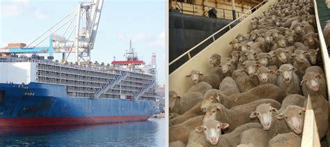 grueling journey   animals shipped