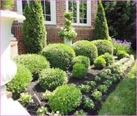 dwarf flowering shrubs home design ideas best shrubs