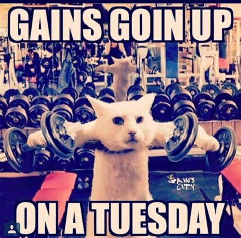 Gym Motivation Memes - 350 best gym motivation memes images on pinterest