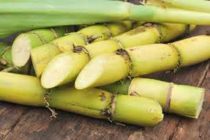 Agave Plant Diseases - organic sugar cane