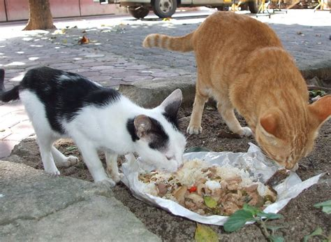 feeding dogs santisook dogs and cats chiang mai thailand a kinder option to just feeding stray