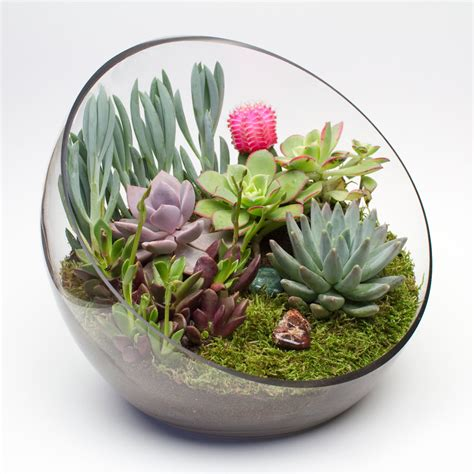 big ol egg diy succulent terrarium kit juicykits com