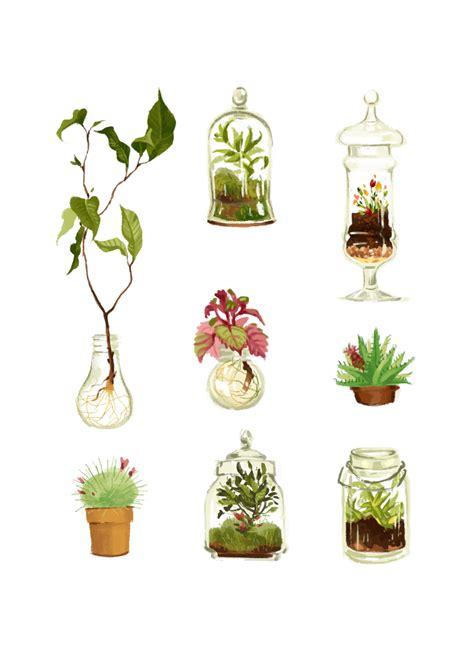 plants  glass  pots eugenes  plant art