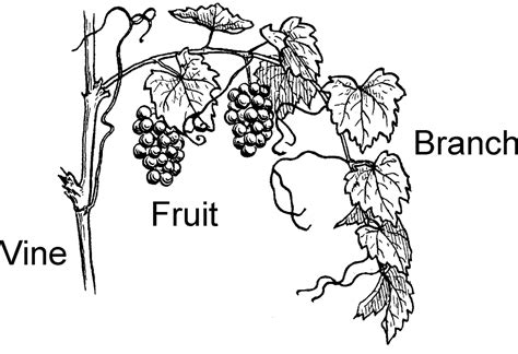 Coloring Page Vine And Branches by Free Coloring Pages Of Jesus I Am The Vine