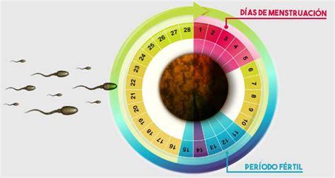 se puede salir embarazada con el periodo 191 me puedo quedar embarazada durante la menstruaci 243 n md