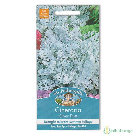 Benih Bunga Cineraria benih cineraria silver dust 200 biji mr fothergills