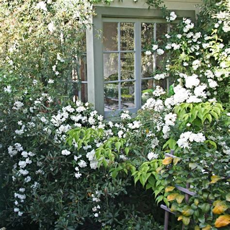 All Of Garden by An All White Garden Serene Simple Sophisticated