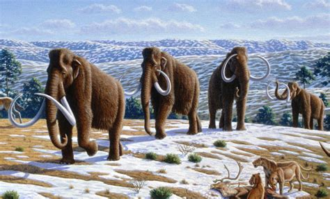 animal during great ice age tar pit clues provide ice age news science news for students