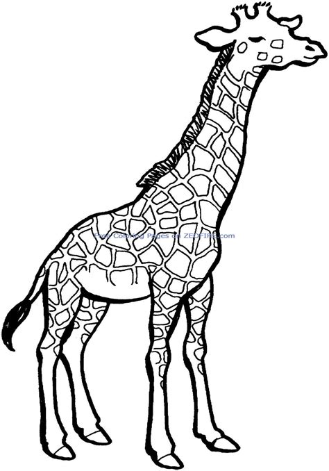 printable giraffe coloring pages pertaining to really
