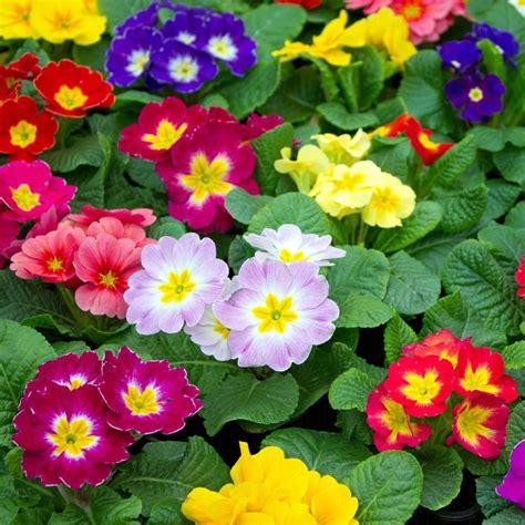 Plantes Et Jardins by Primev 232 Re Des Jardins Plantes Et Jardins