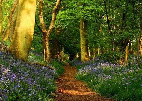 el bosque de los postales de caminos en el bosque