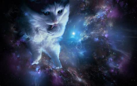 Cat In Space space cats hd wallpaper wallpapersafari