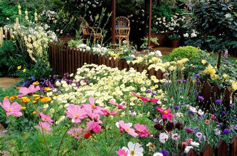 Cut Flower Garden Plan How To Plan And Grow A Cutting Garden