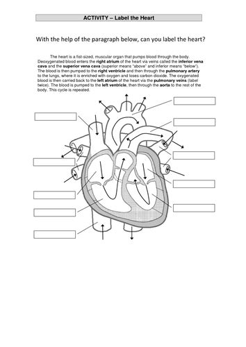 the heart and circulatory system | Teaching Resources