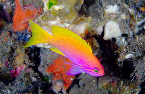 colorful saltwater fish colorful saltwater fish