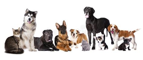 free puppies in delaware of dogs and cats stock photo image of dachshund 56603668