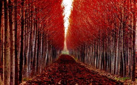 eccezionale Foto Di Alberi Da Giardino #1: potatura-alberi.jpg