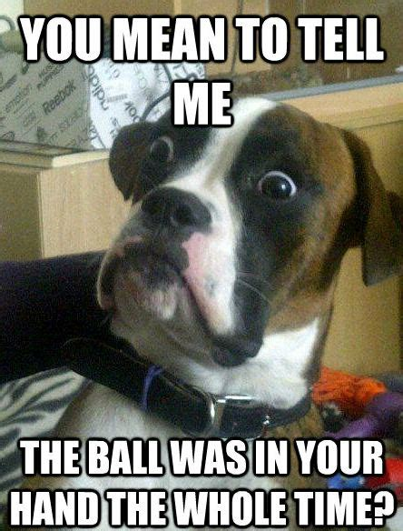 Funny Dog Face Meme - shocked dog meme shows a pup in a state of perpetual surprise