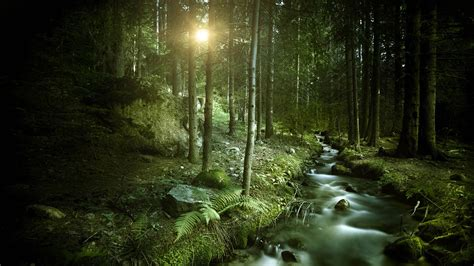 wallpaper hd 1920x1080 forest stream in the forest 1920x1080 wallpapers 1920x1080