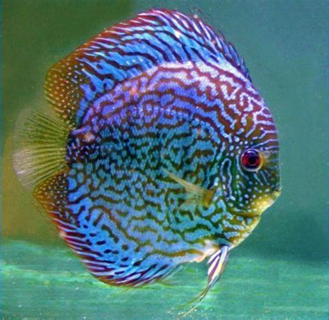 colorful aquarium fish best 25 colorful fish ideas on pretty fish