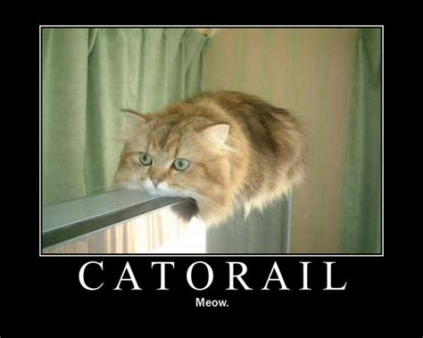 catorail meow imghumour
